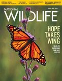 National Wildlife Magazine_